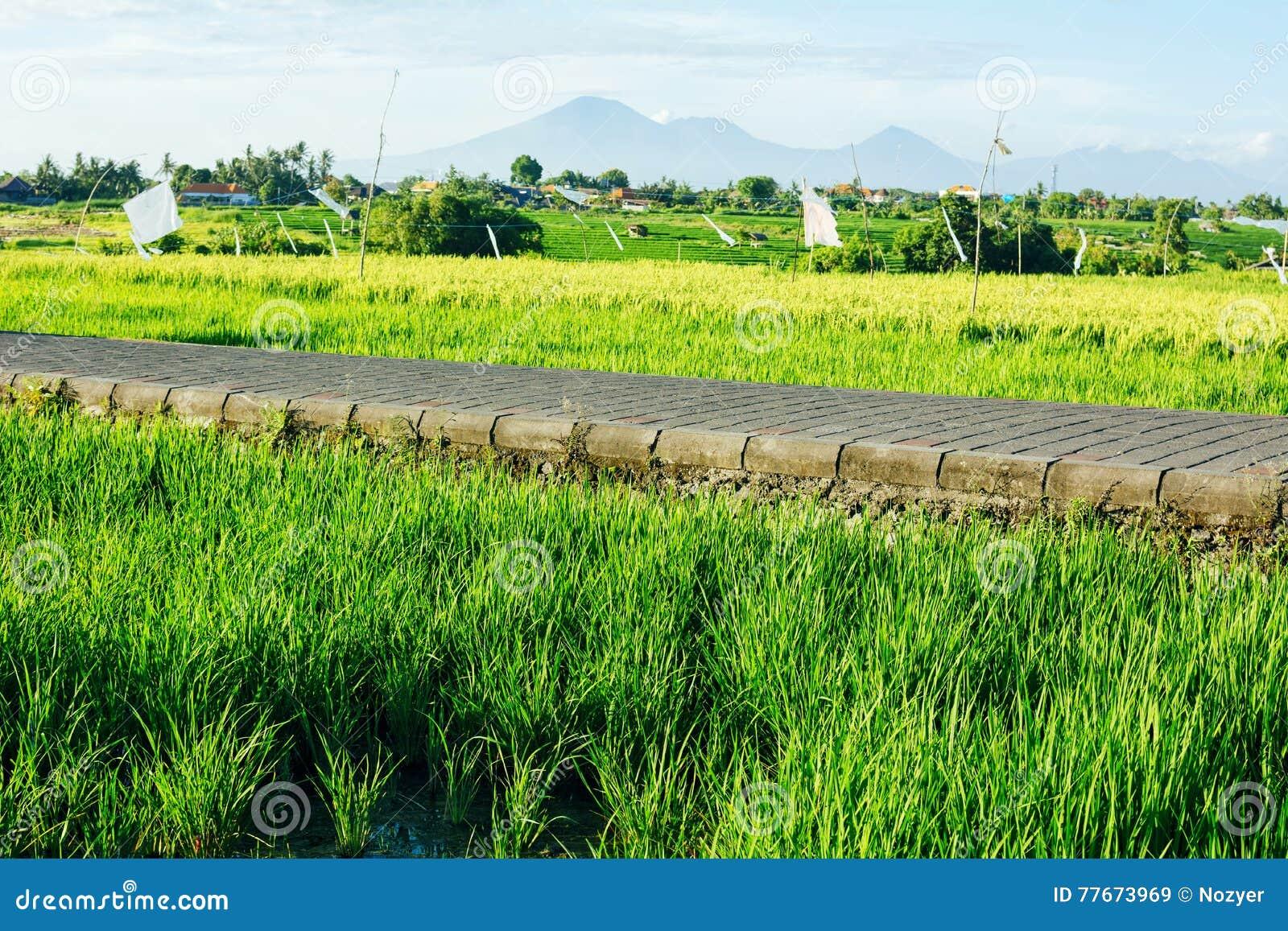 Risfält och väg med berg på bakgrund