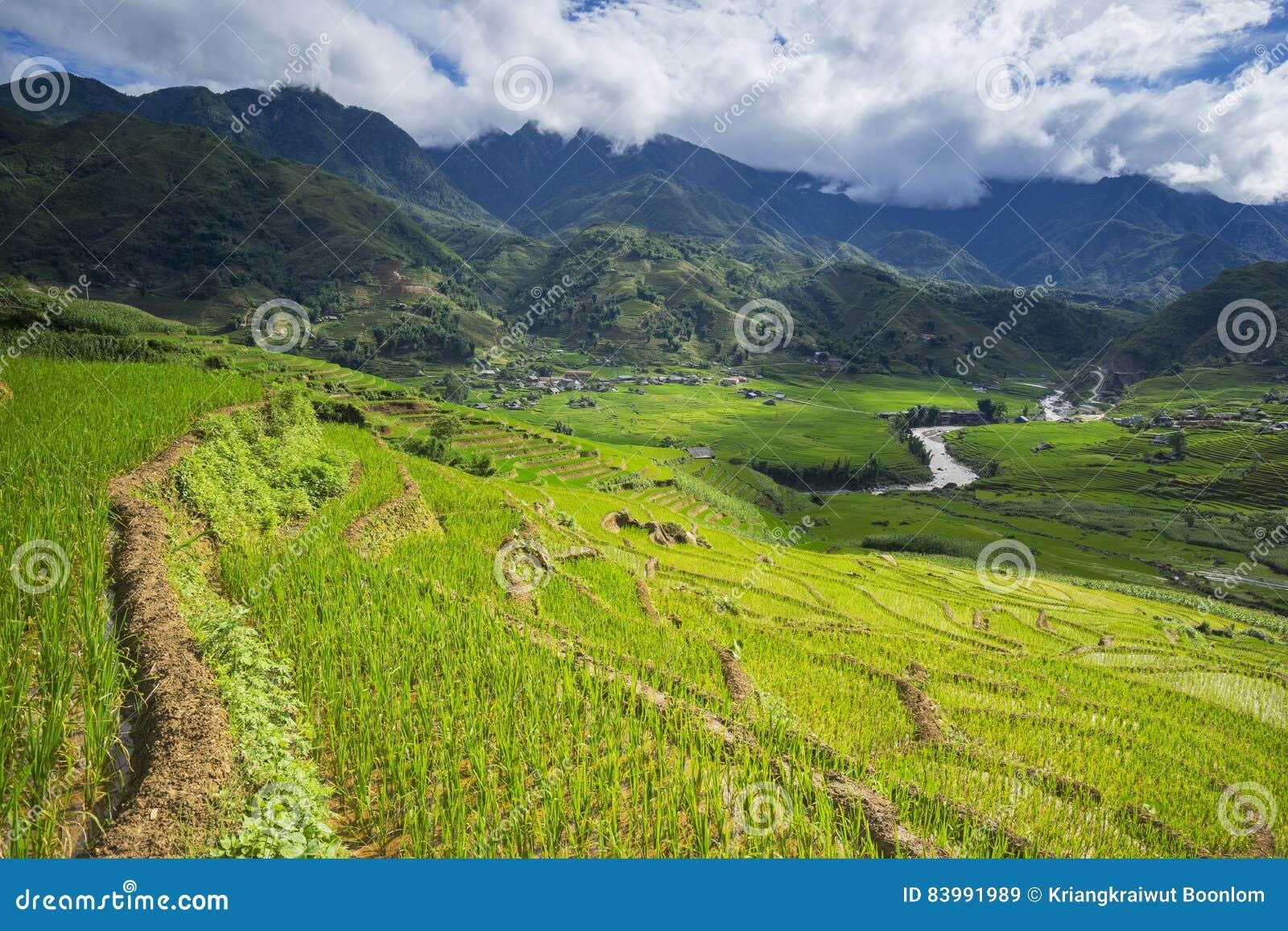 Risfält terrasserade på i rainny säsong på SAPA, Lao Cai, Vietnam