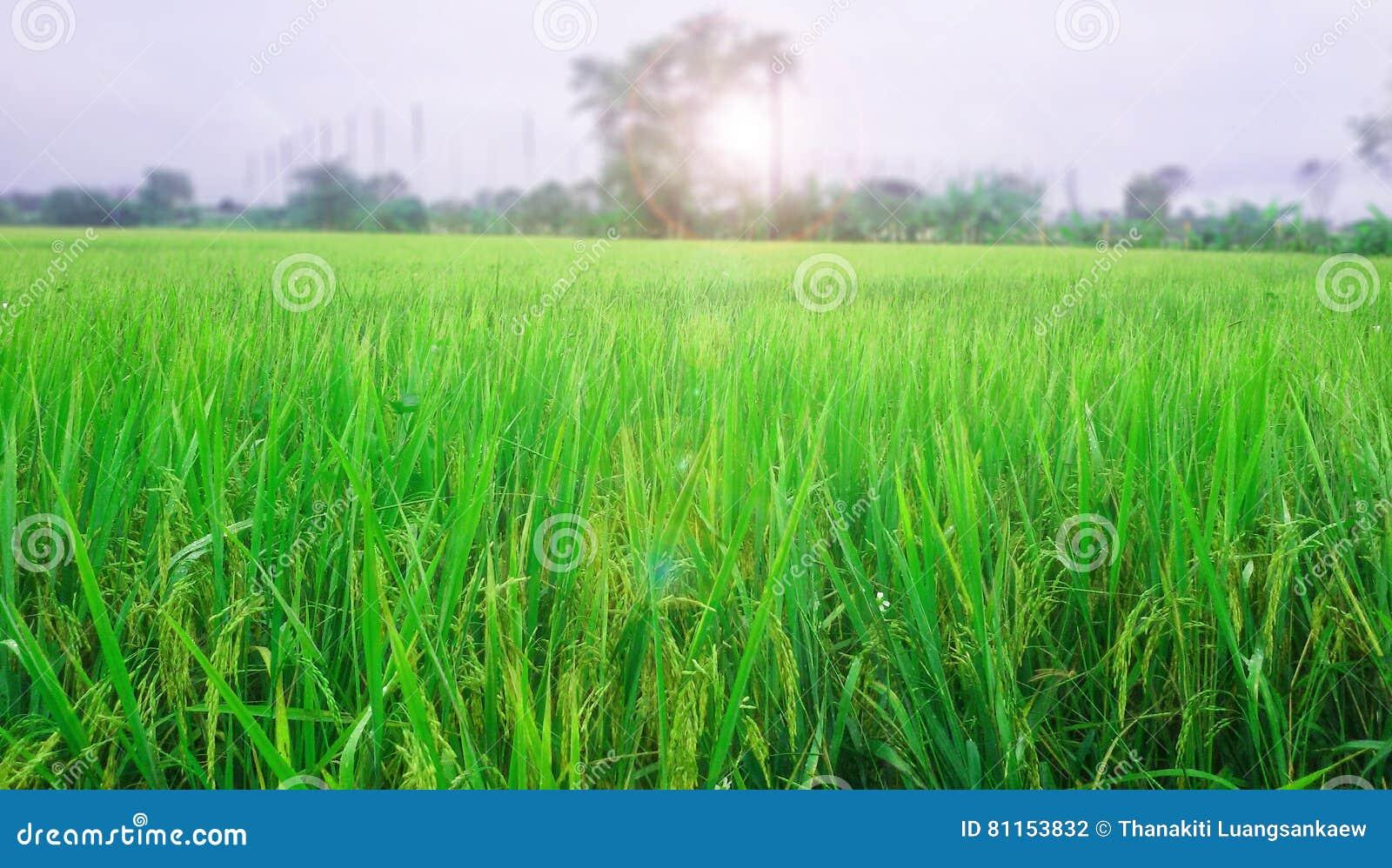 Rislantgård i morgon