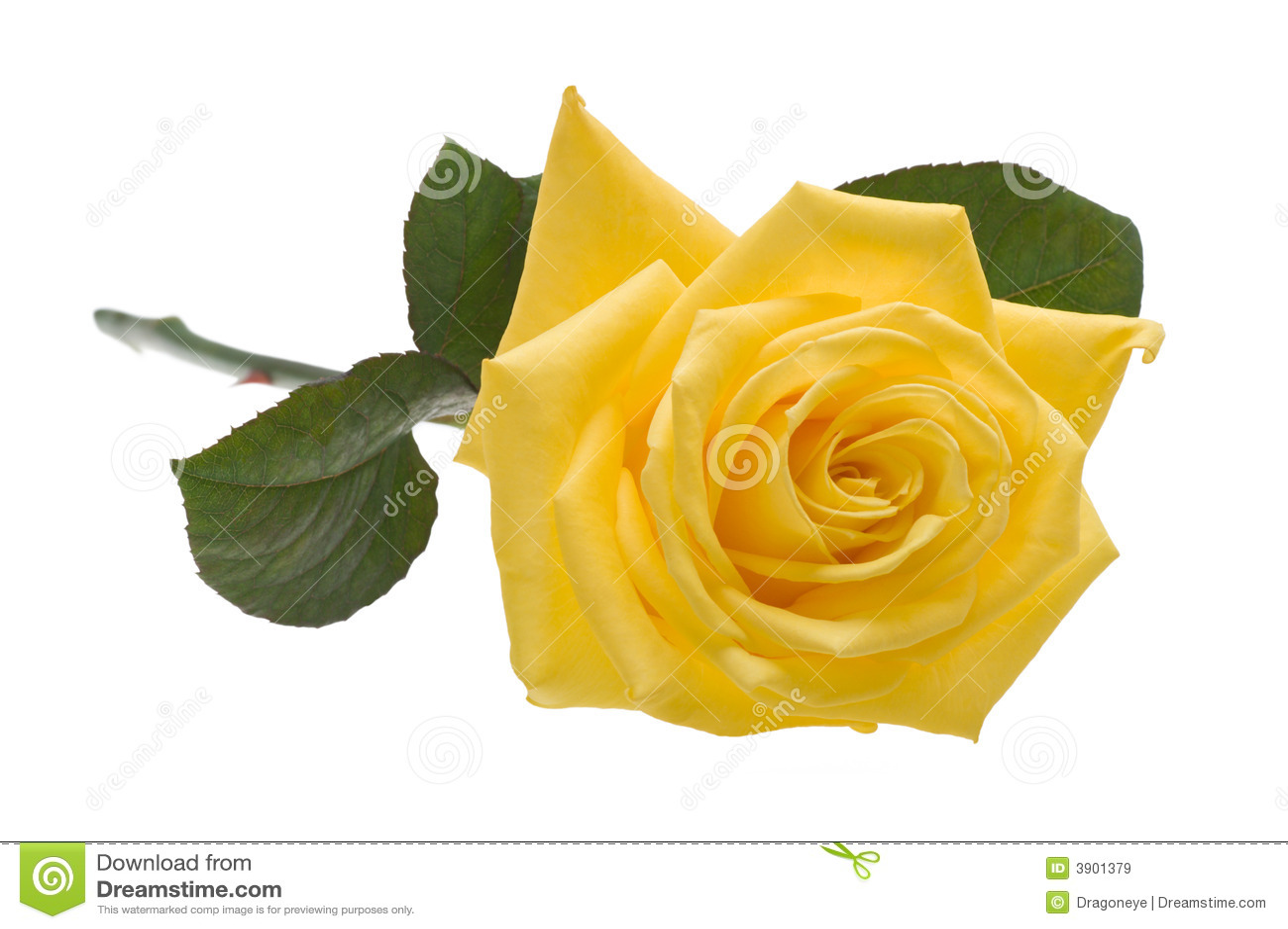 Ritaglio di rosa di colore giallo immagini stock libere da for Oggetti di colore giallo