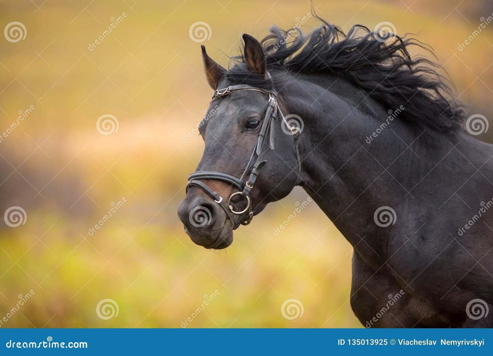 Ritratto del cavallo nel moto