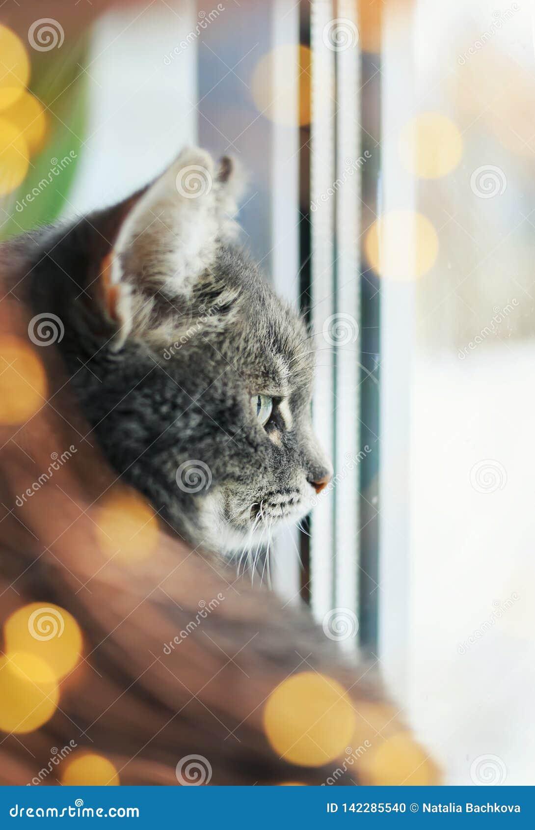 Ritratto del gatto contento sveglio che si siede e che guarda fuori la finestra circondata da scintillio e dai cerchi festivi lum