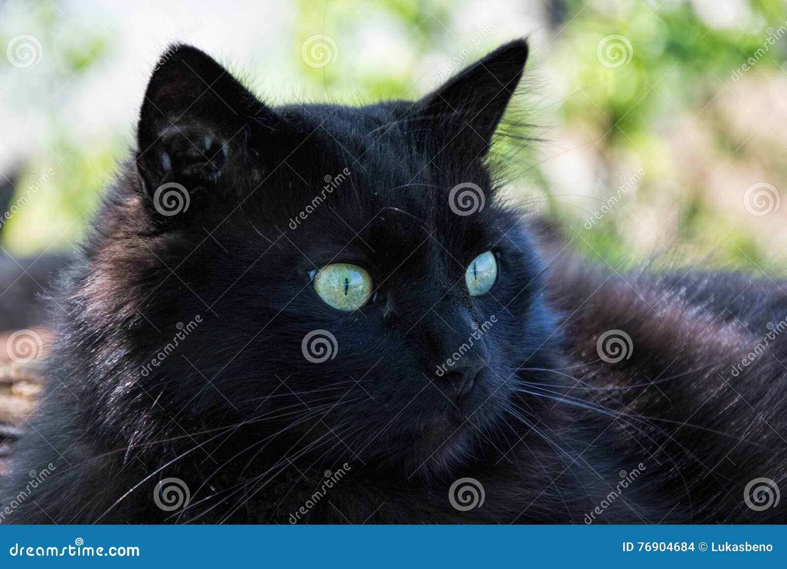 Salute visibile oggi e domani PURINA ONE Sterilcat Hairball è specificatamente formulato per gatti sterilizzati con una predisposizione alla formazion.