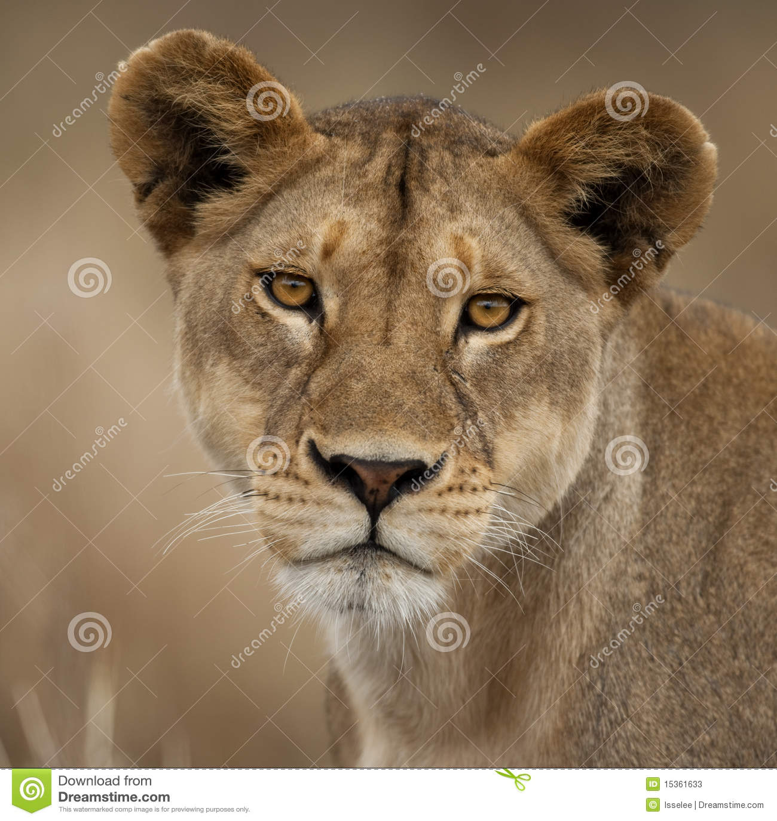 Ritratto del primo piano della sosta nazionale di Serengeti