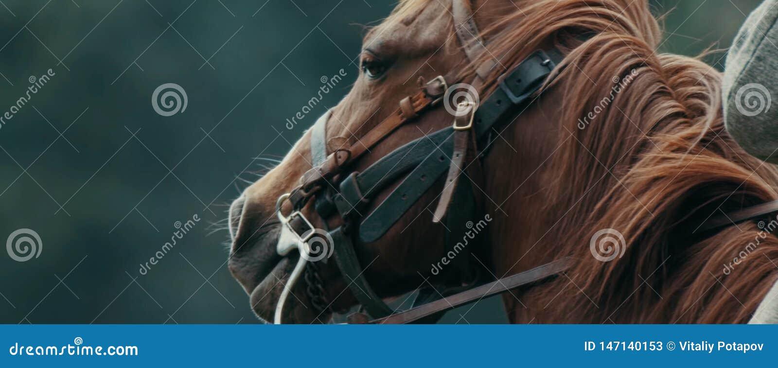 Ritratto della testa di cavallo su sfondo naturale