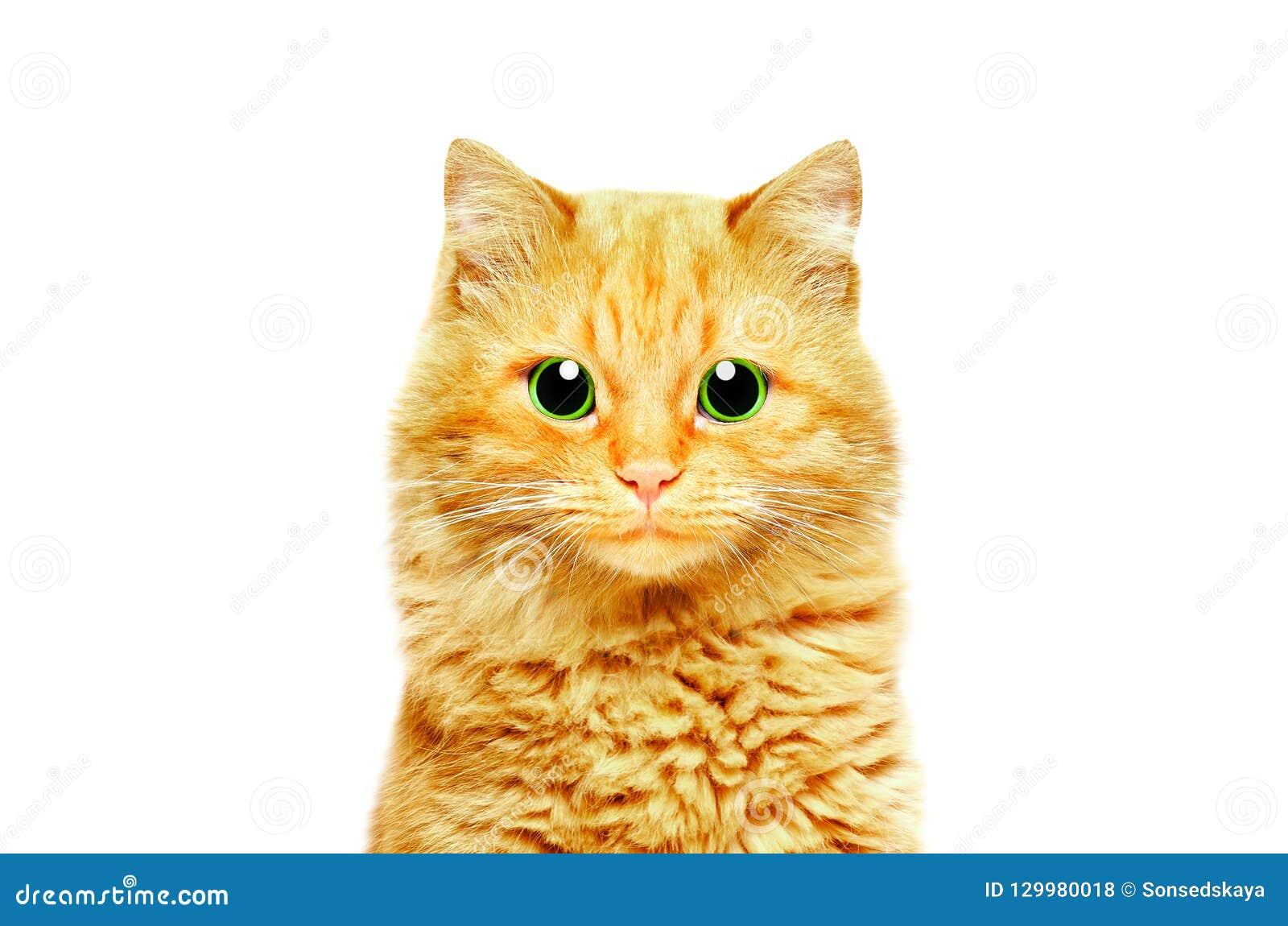 Ritratto di bello gatto dello zenzero con gli occhi verdi
