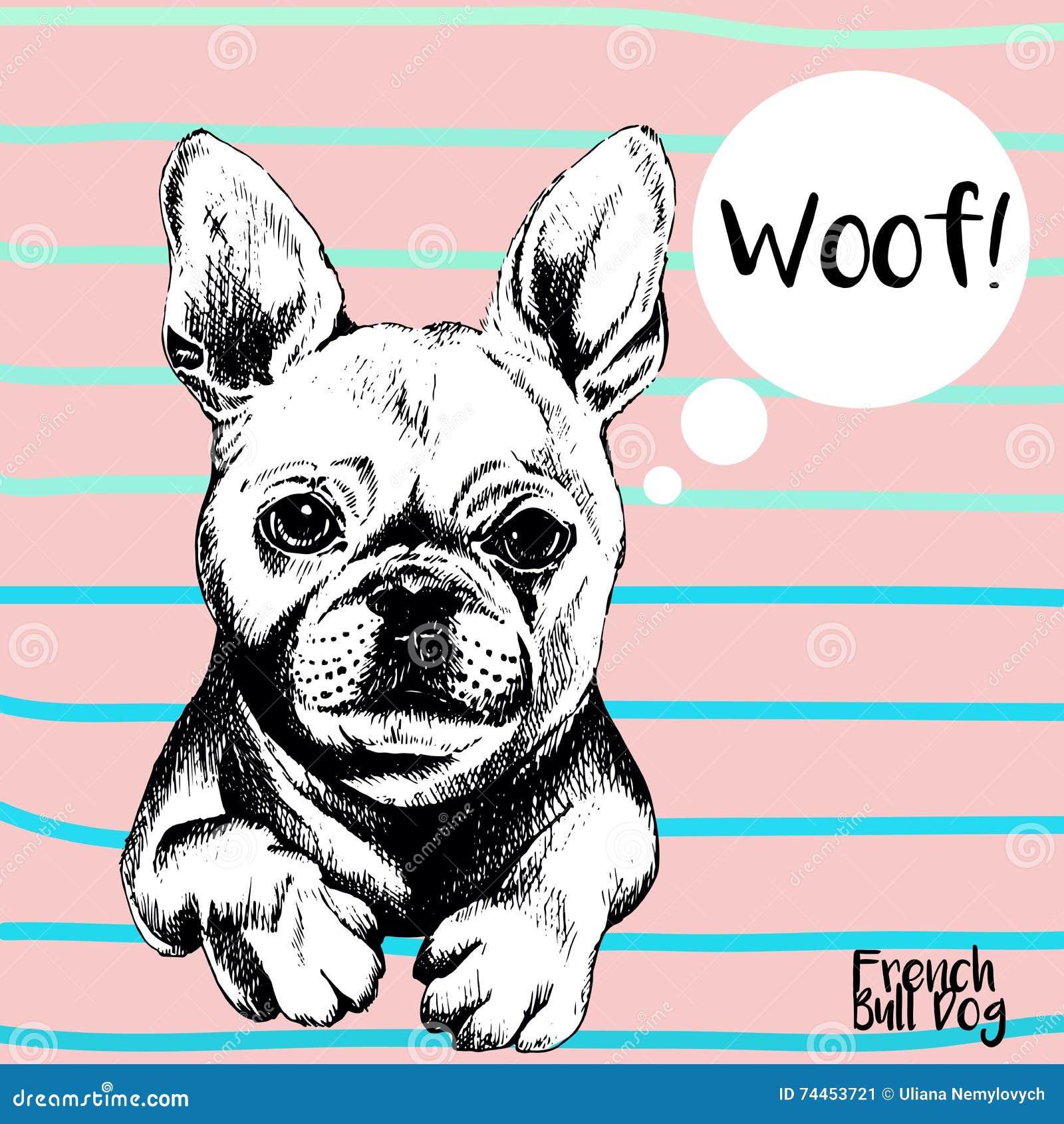 Ritratto alto vicino di vettore del bulldog francese Illustrazione  domestica disegnata a mano del cane di animale domestico Isolato su fondo  rosa con le ... 19003276456f