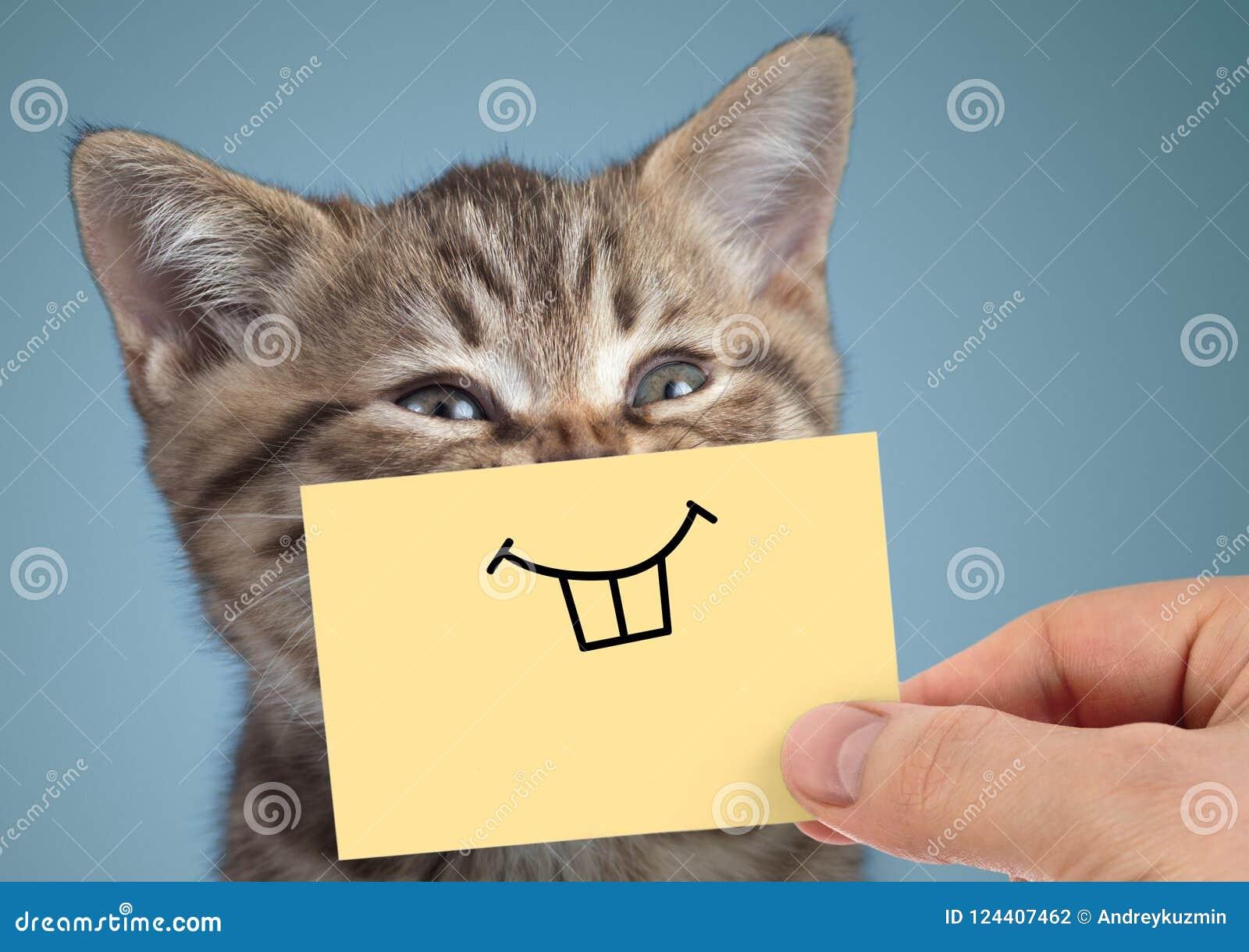 Ritratto pazzo felice del gatto con il sorriso divertente su fondo blu