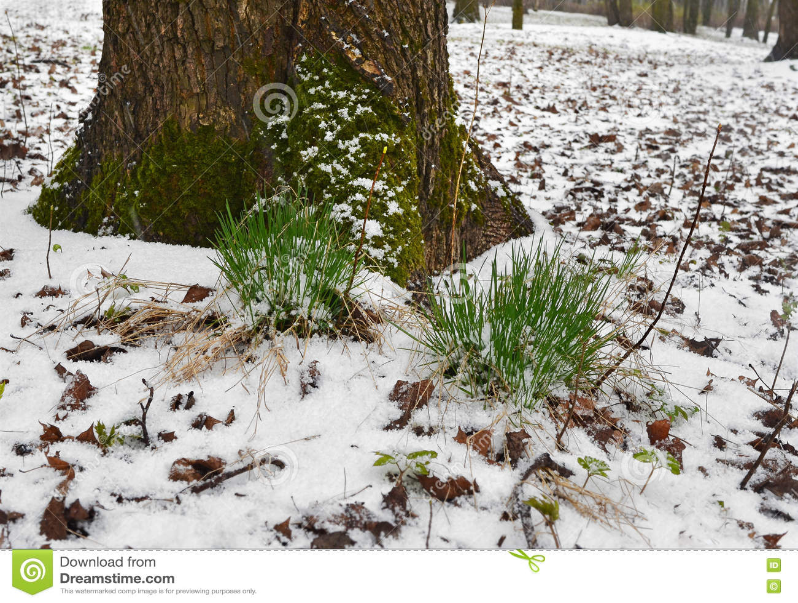 Riunione dell inverno e della primavera 3