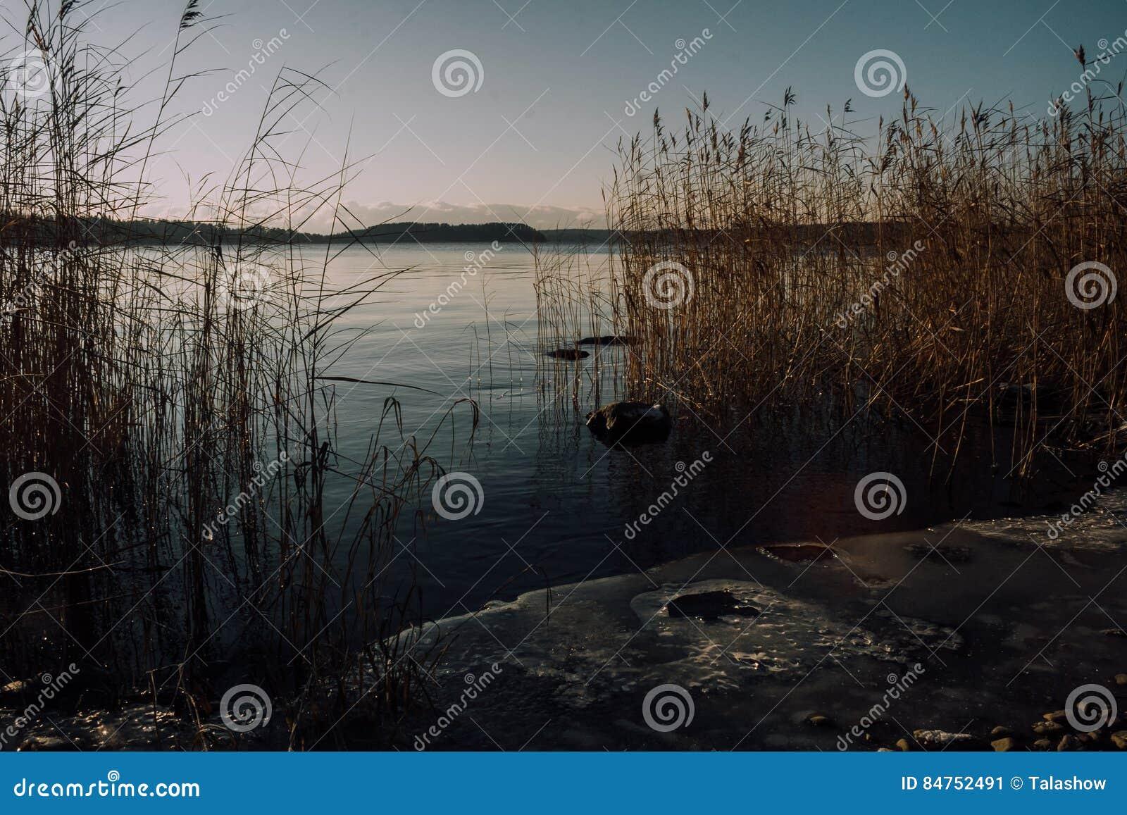 Rivage congelé de lac