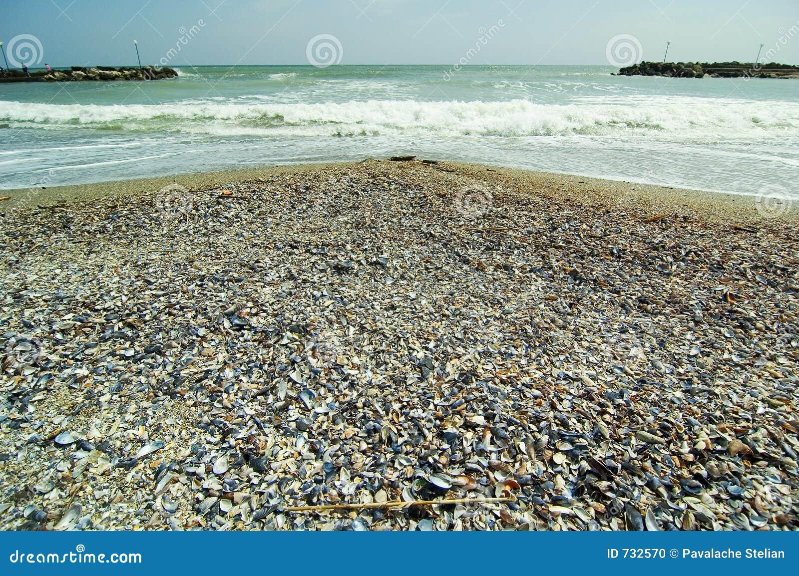 Rivage de la Mer Noire