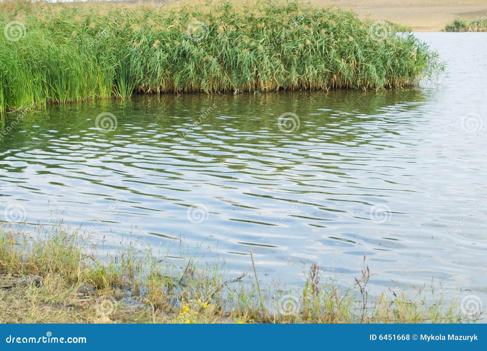 Rivage de lacs