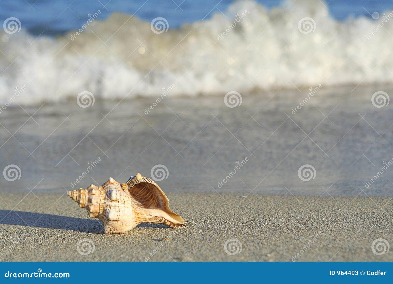 Rivage de mer