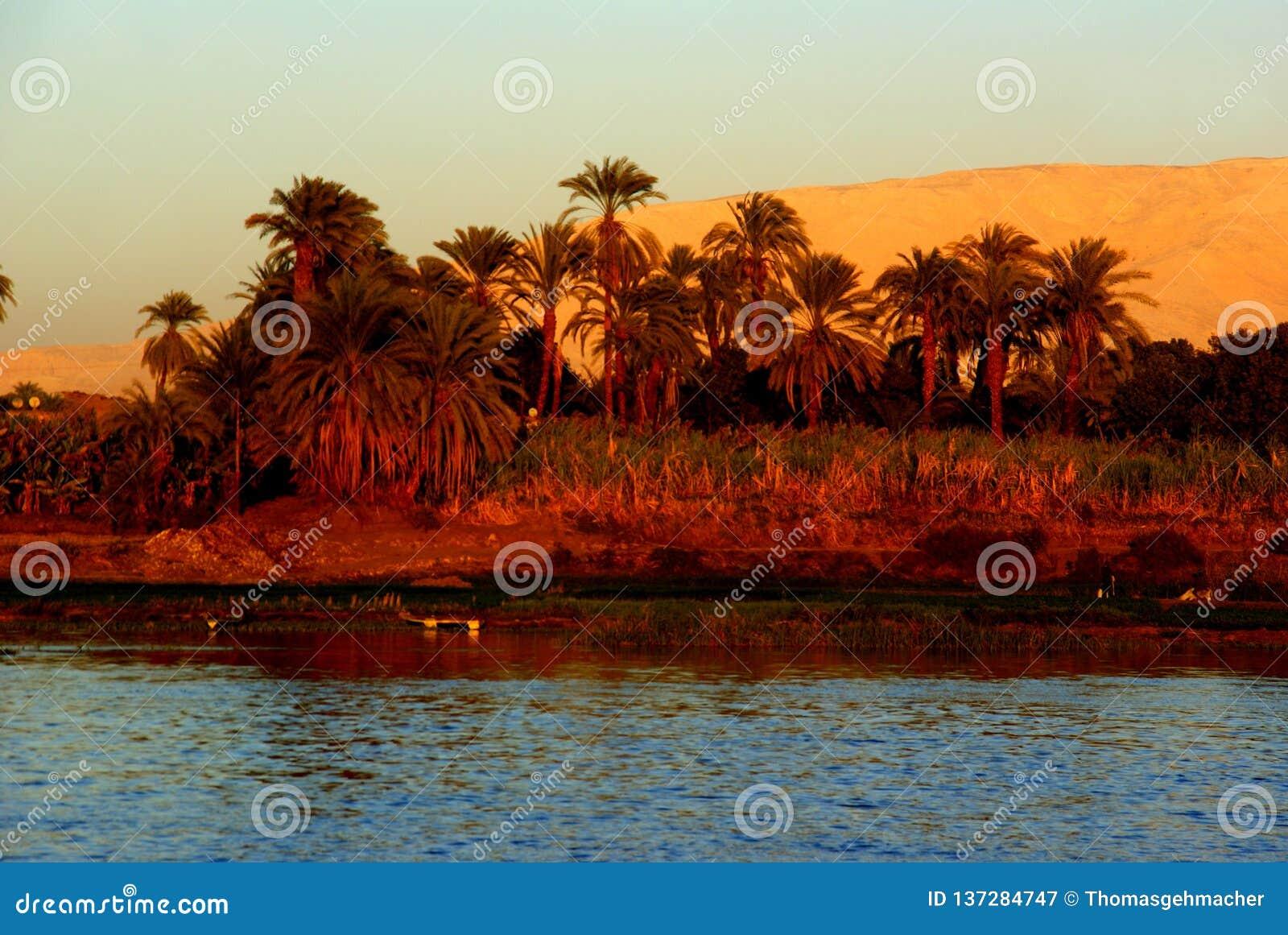Rivage du Nil avec des palmiers dattiers dans la lumière égalisante rouge