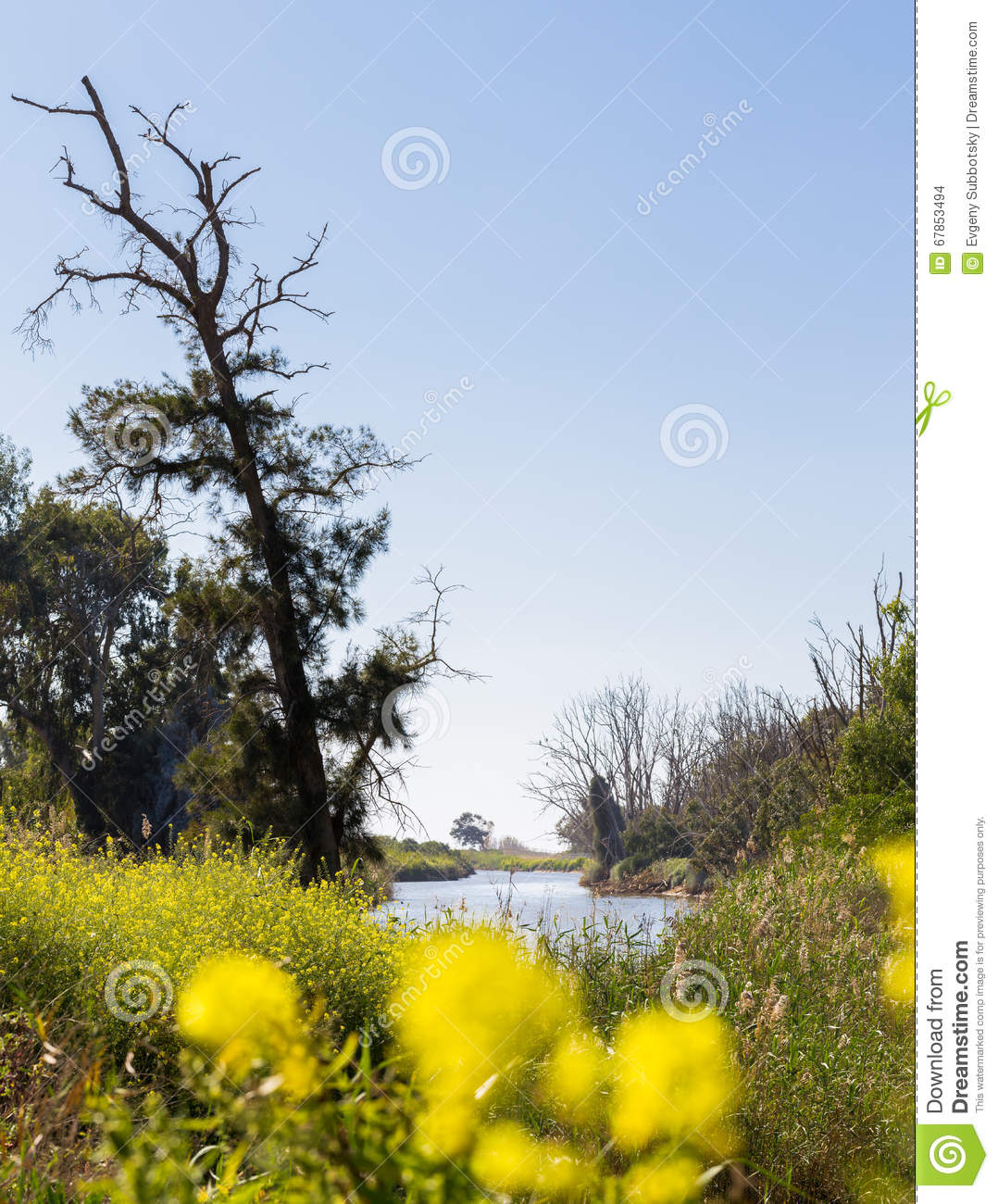 River Bank Trees Bush Blossom Spring Flowers Stock Photo Image Of