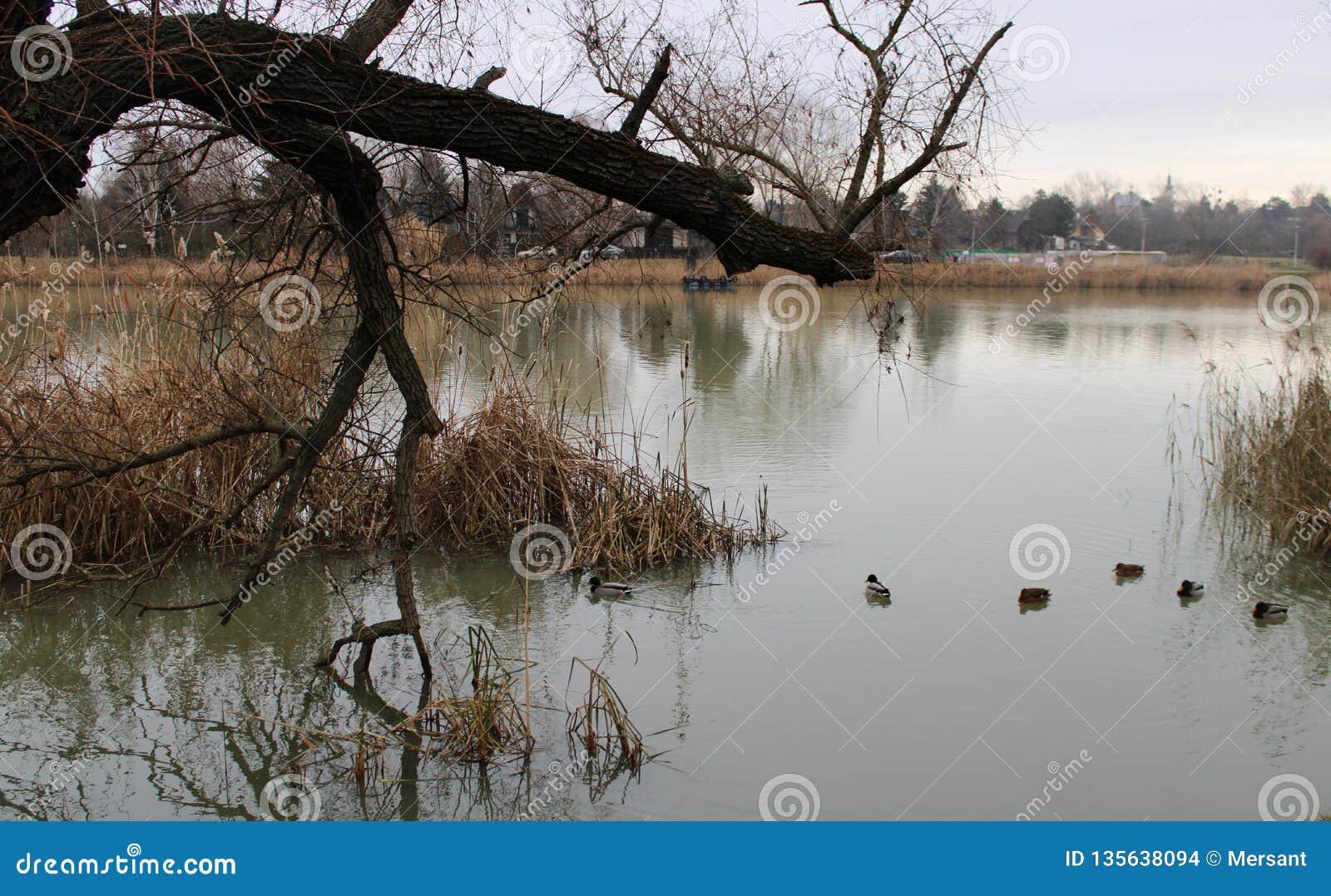 River Danube in winter