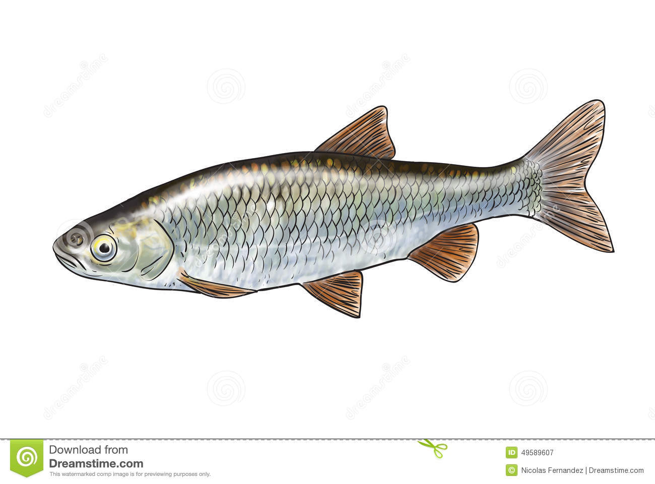 River Fish Stock Illustration - Image: 49589607