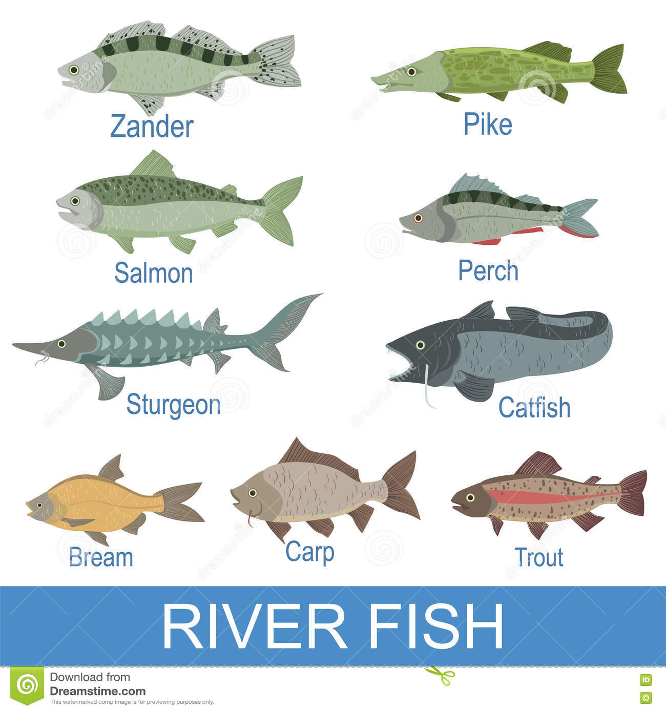 River fish identification slate with names stock vector for Names for a fish