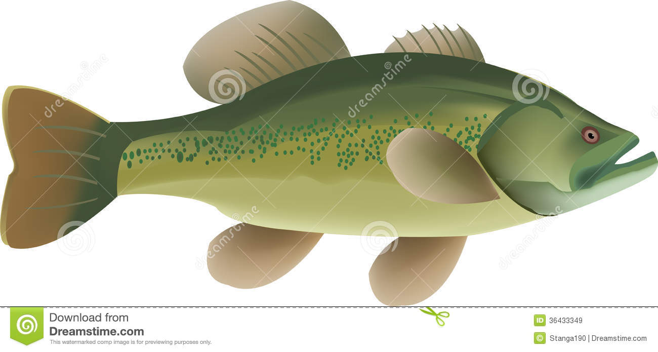 River fish royalty free stock images image 36433349 for Predatory freshwater fish