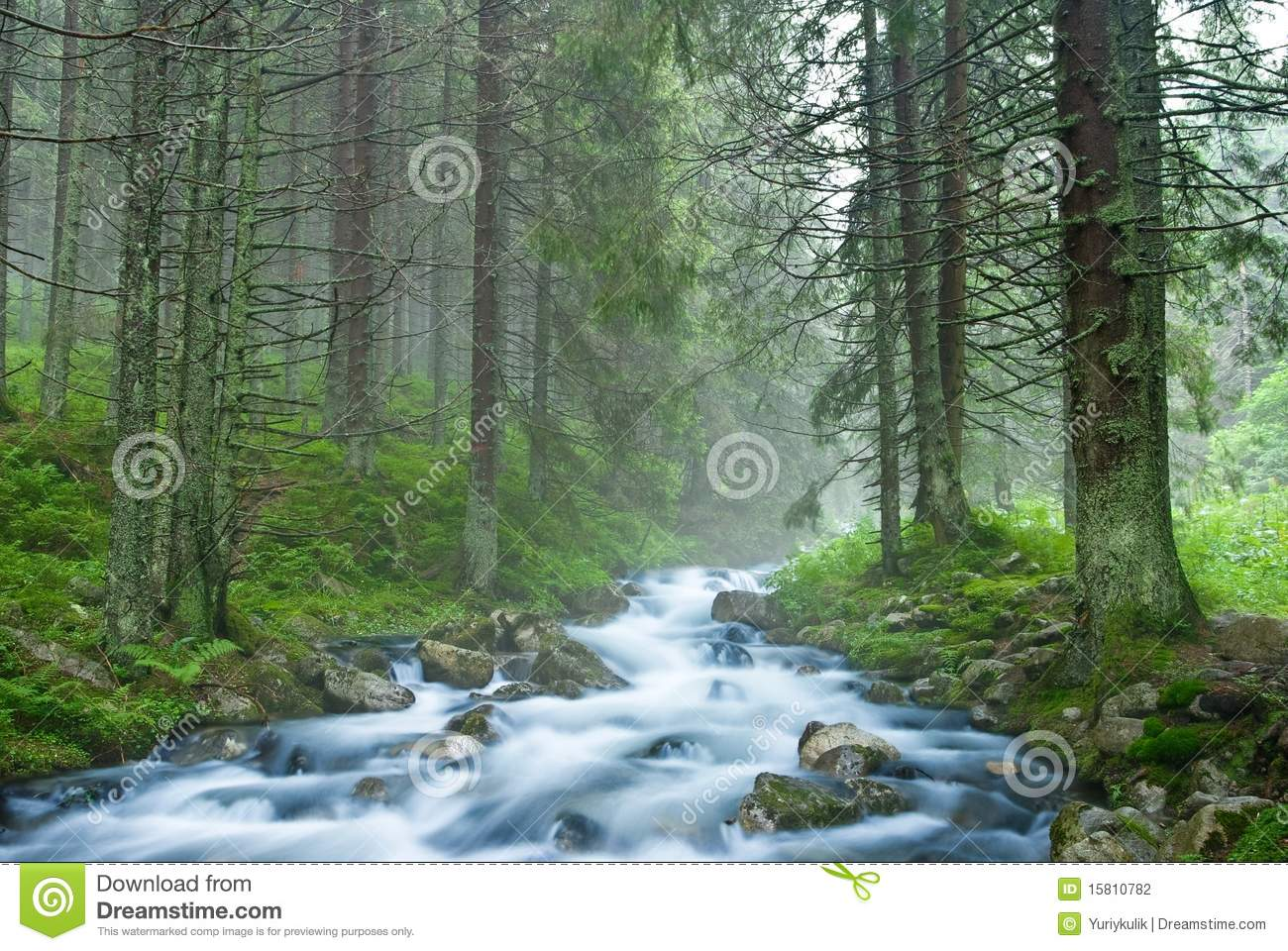 Misty Green Forest Nature River Beautiful 1ziw