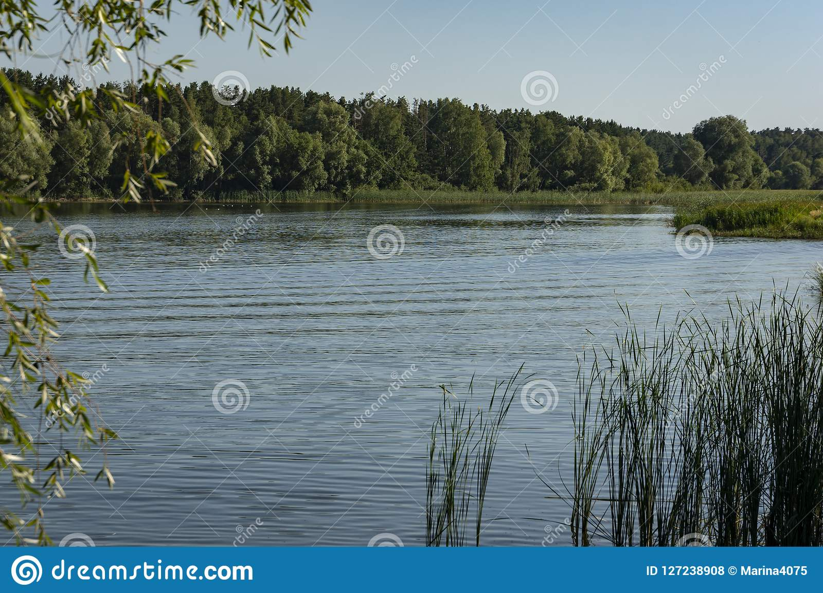 The river flows along the forested coasts. The Bay of the Volga River near the city of Ulyanovsk.