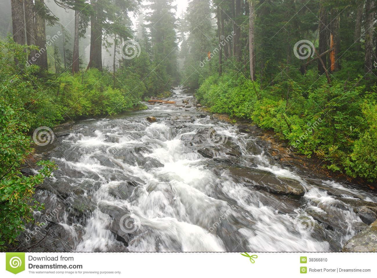 River in a Forest