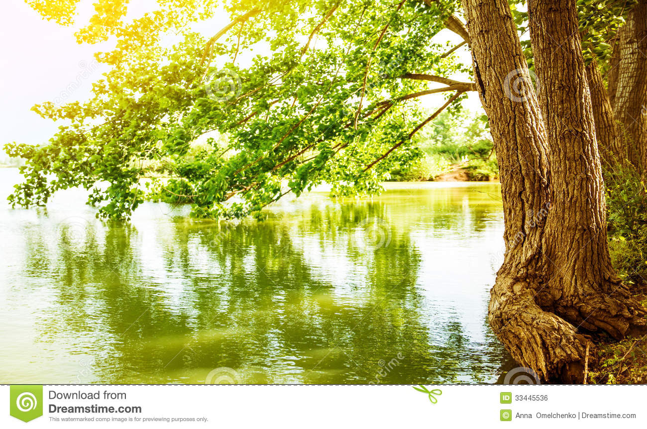 Beautiful river landscape, reflection of big tree in calm water ...