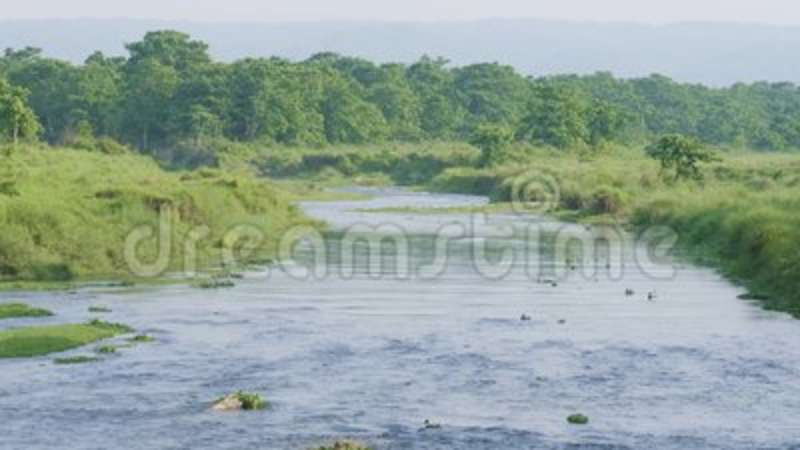 River in the rainforest in the national park Chitwan, Nepal
