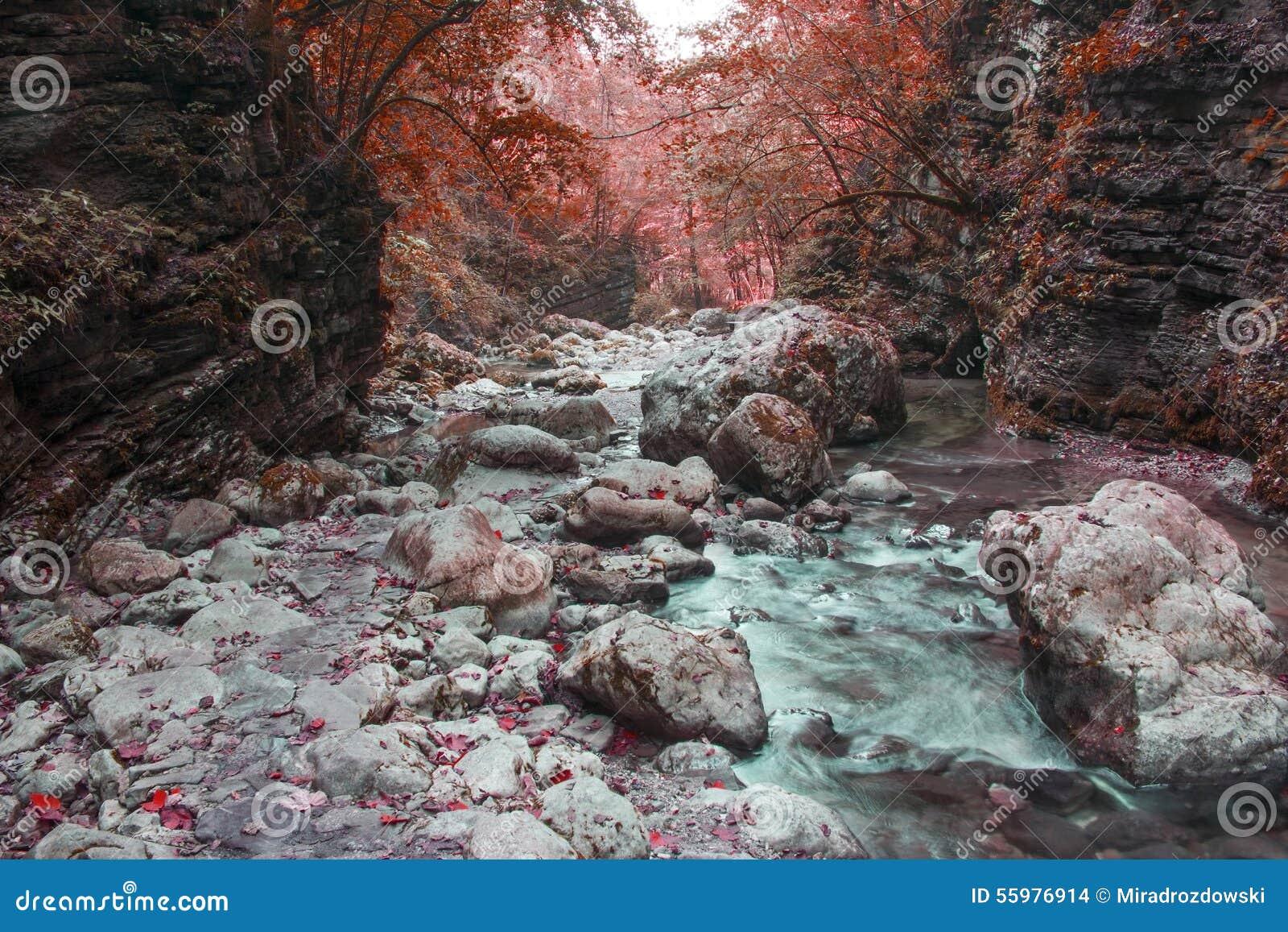 River stream in colorful autumn forest in Slovenia