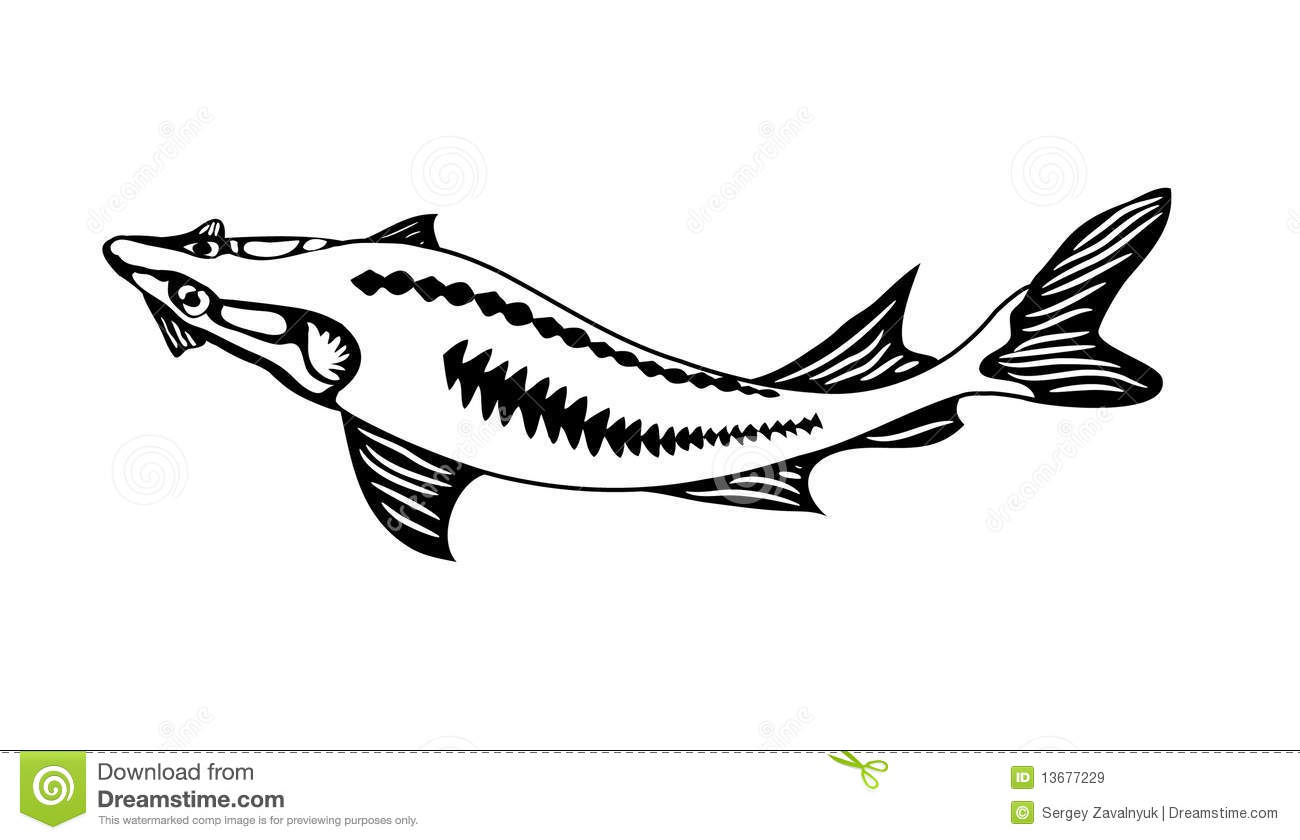 River Sturgeon Royalty Free Stock Images Image 13677229