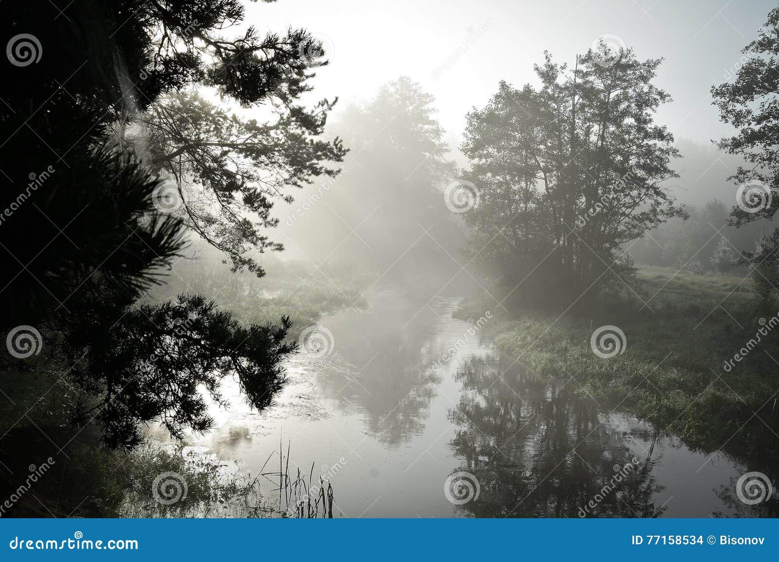 Rivière dans la brume, le matin