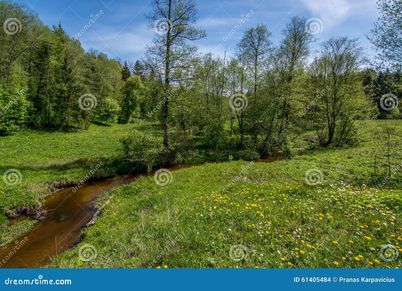 Rivière dans une forêt