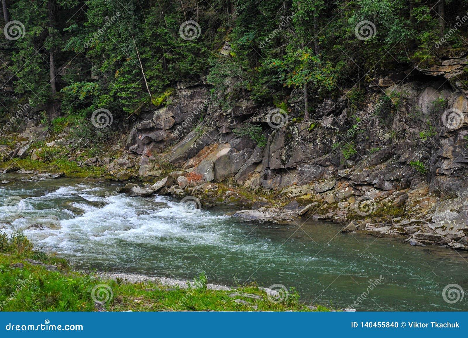 Rivière de montagne dans les montagnes carpathiennes Ukraine avec une roche à l arrière-plan et à une forêt dense