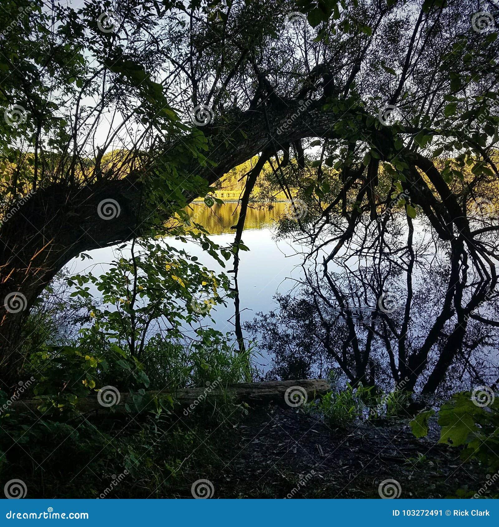 Rivière du nord incurvée en bois de réflexion d arbre