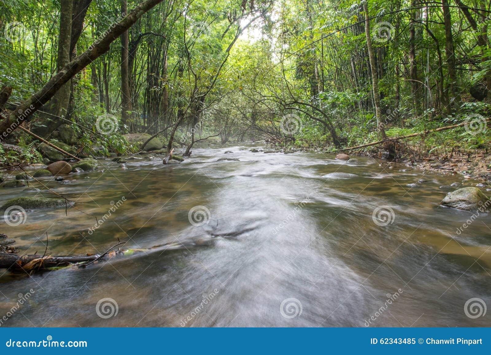 Rivière profondément dans la forêt tropicale de montagne