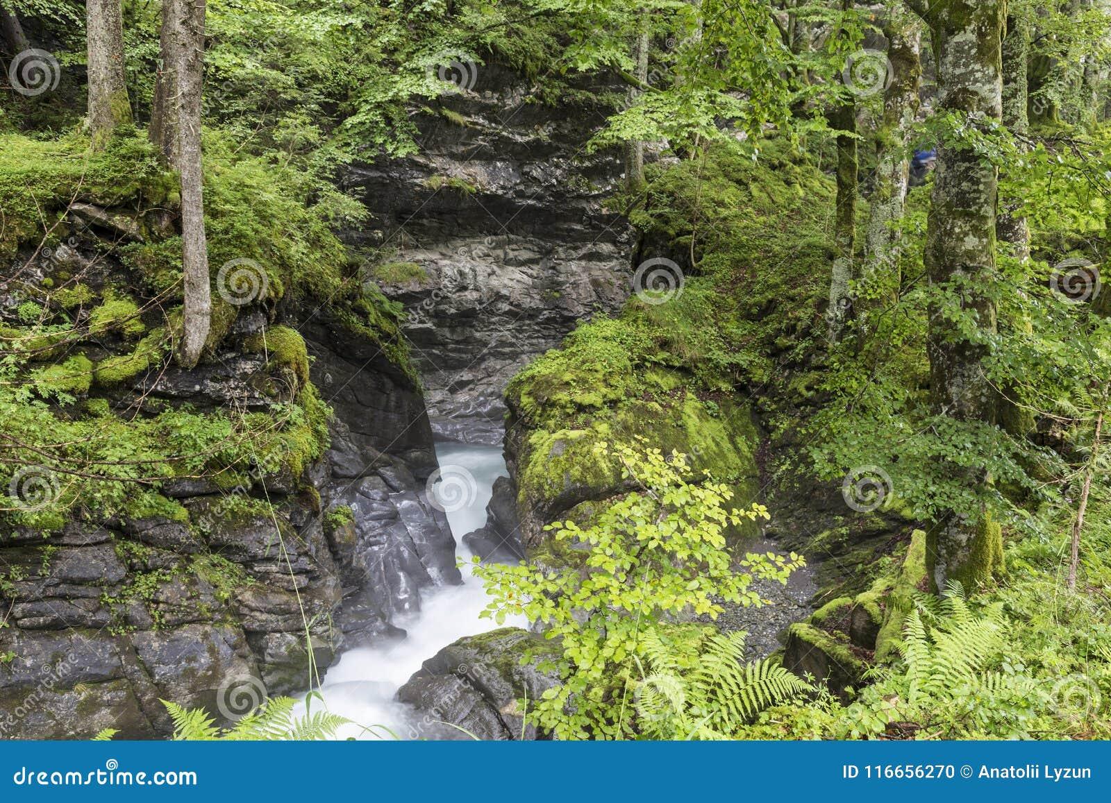 Rivière rapide de montagne dans le canyon