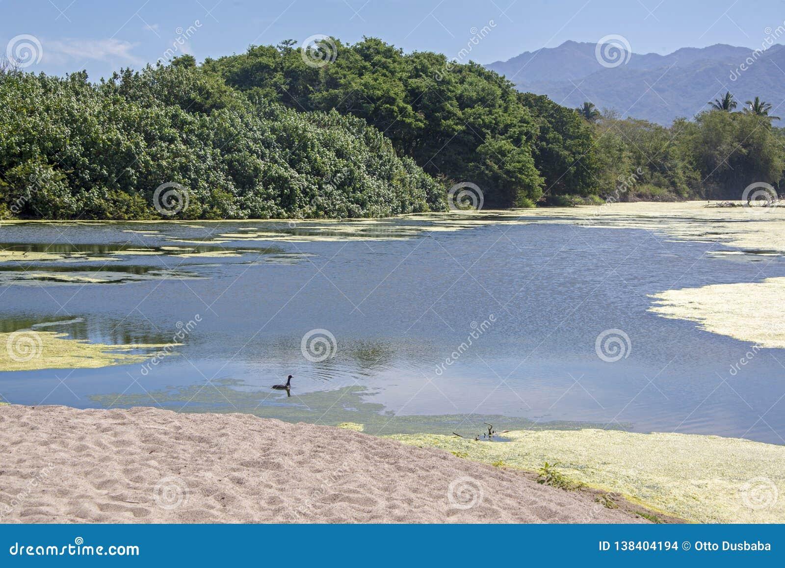 Rivière tropicale dans Sierra Madre