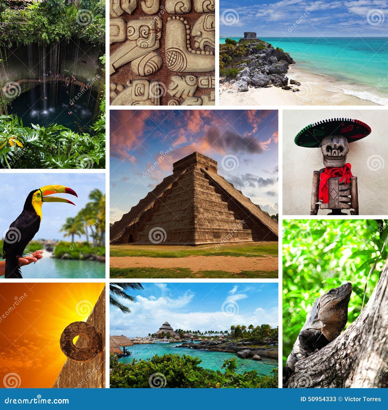 riviera maya views collage stock photo image 50954333 palm tree vector art palm tree vector art