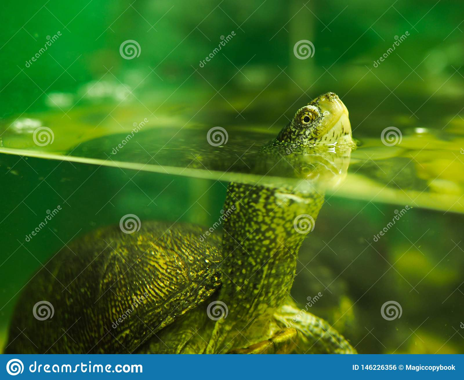 Rivierschildpad in een aquarium