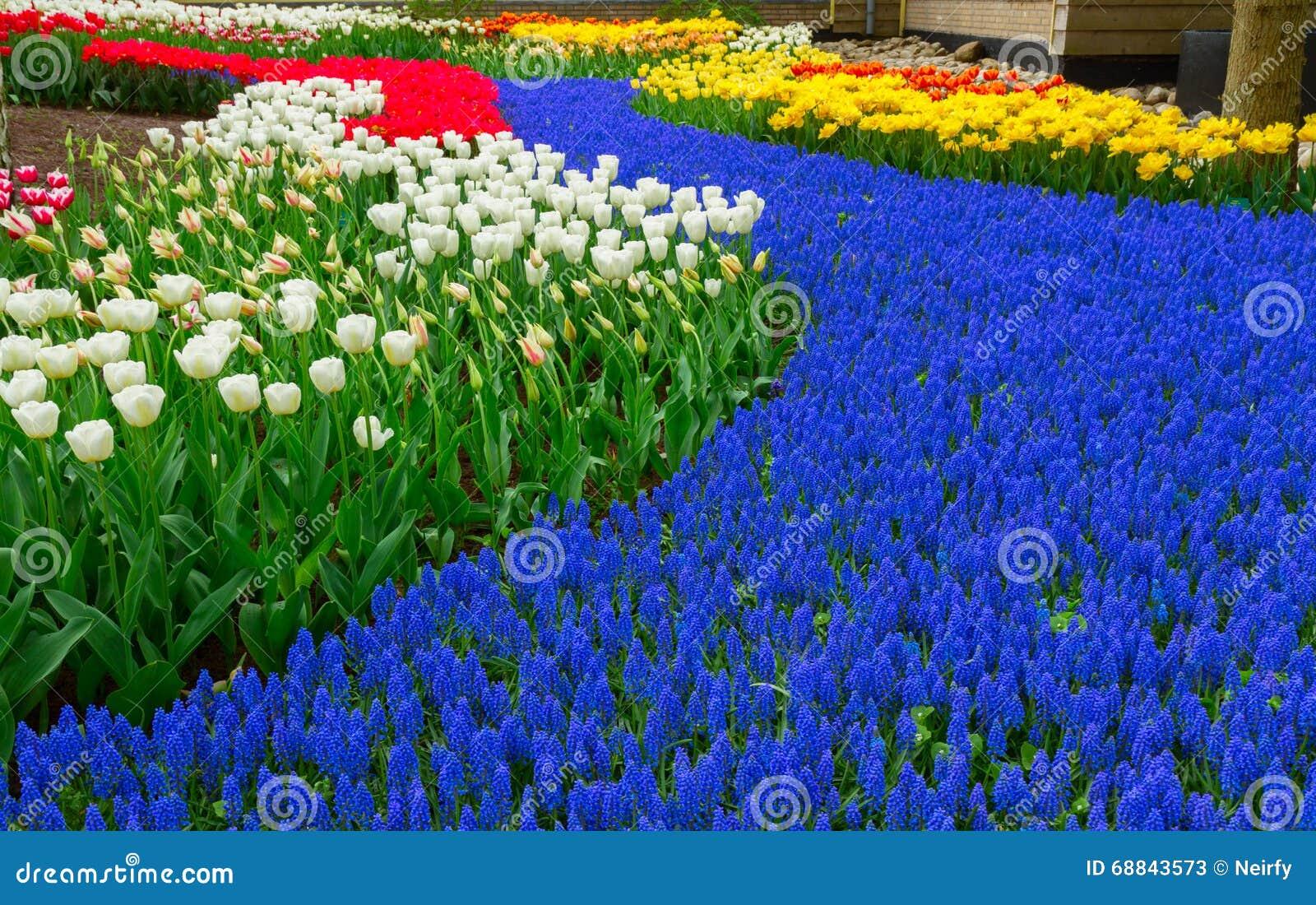Rivi re bleue des fleurs dans le jardin de la hollande for Fleurs dans le jardin