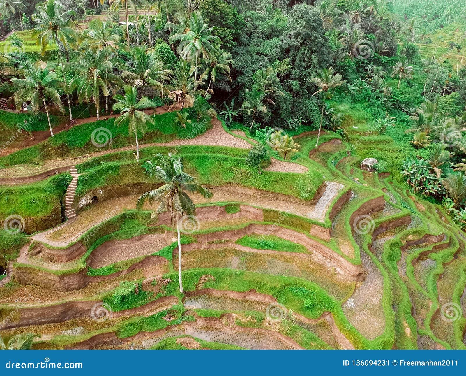 Rizières et forêts sur Bali, la vue à partir du dessus