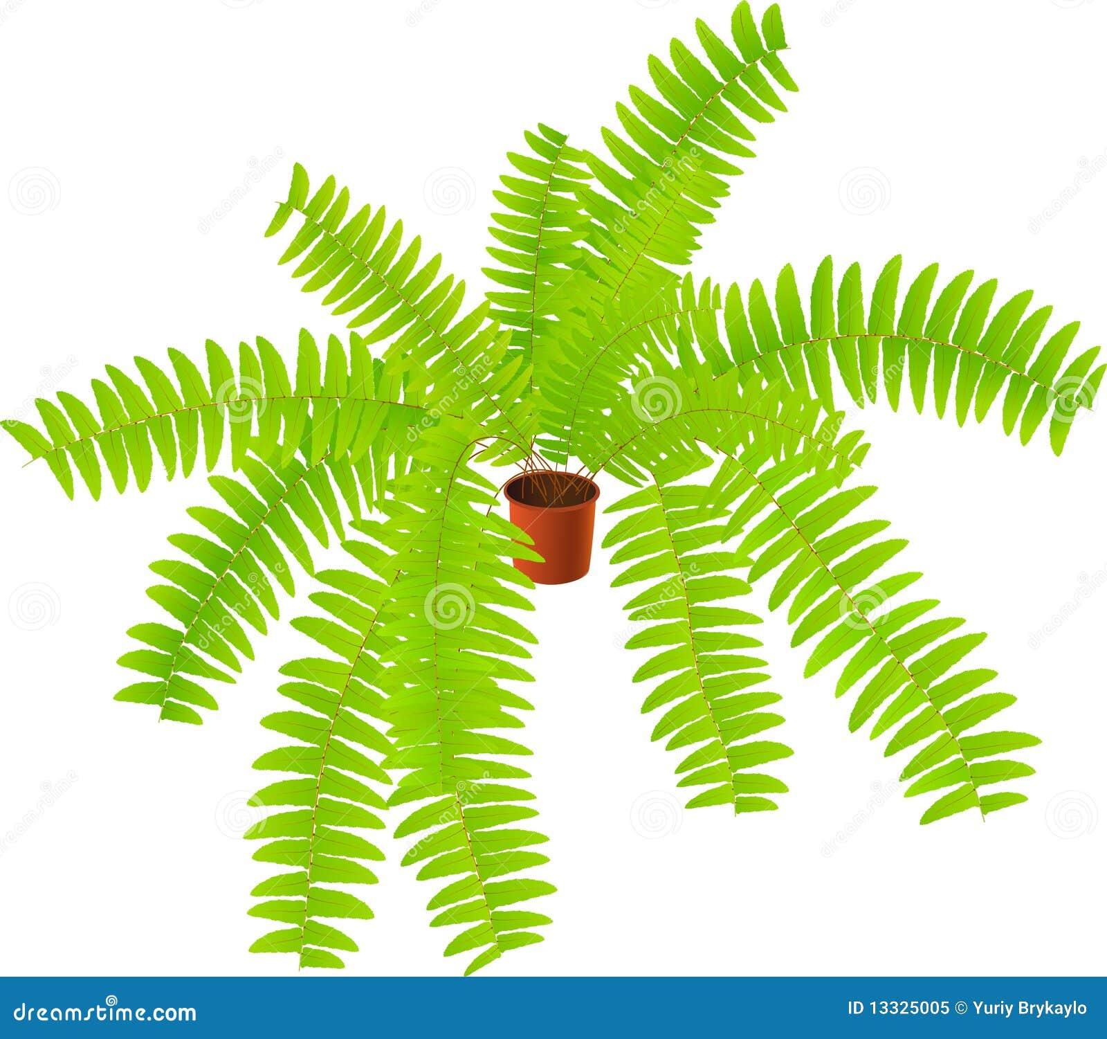 Roślina domowa roślina