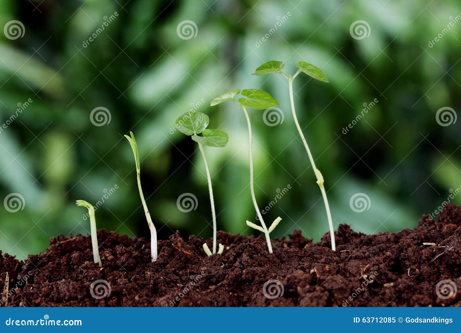 Roślina nowi początki