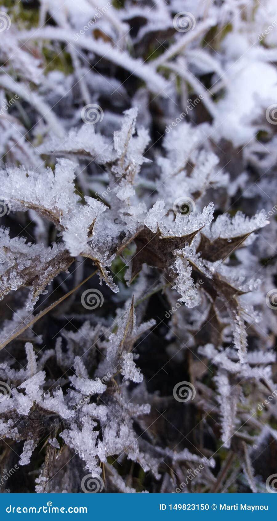 Roślina z kryształami lód