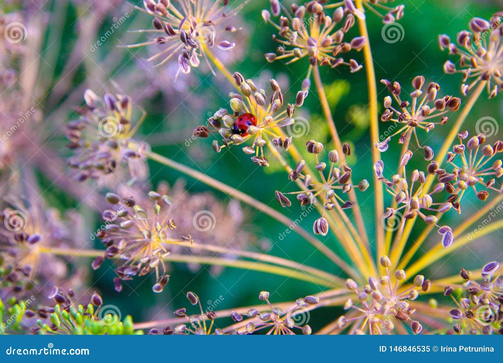 Roślina z małym czerwonym ladybird