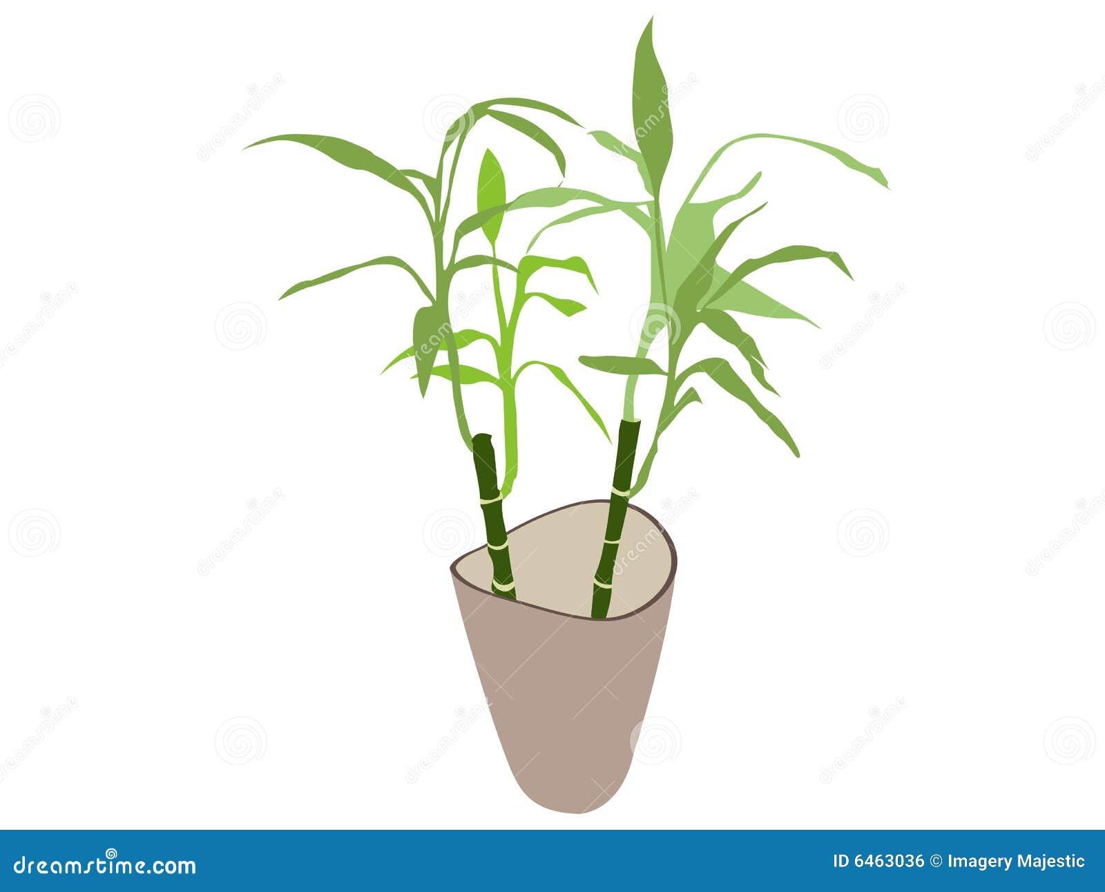 Rośliny bambusowy zioło