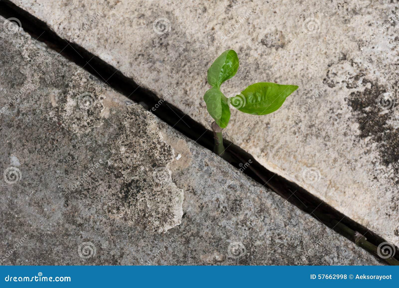 Rośliny dorośnięcie od betonu