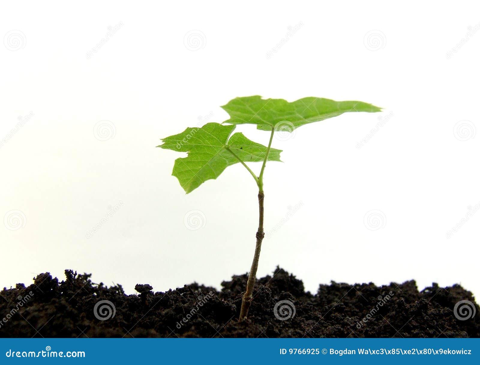 Rośliny flanca