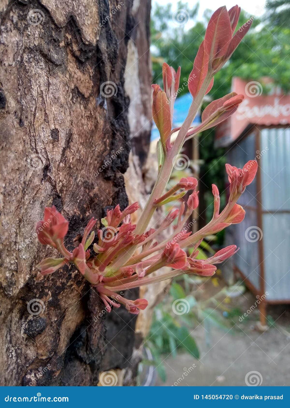 Rośliny odzyskiwanie od cutted drzewa