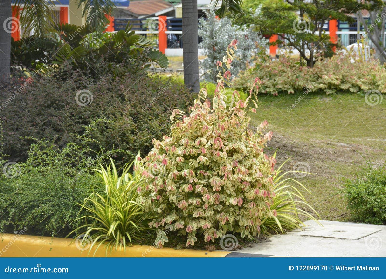Rośliny w przesłankach DPWH biuro, Digos miasto, Davao Del Sura, Filipiny